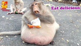 Fat Monkey : Eat more delicious