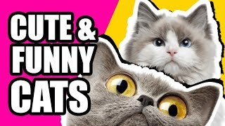 CATS Will Be Always Cats - Cute and VERY FUNNY CATS Compilation