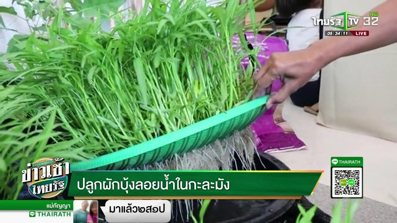ปลูกผักบุ้งลอยน้ำในกะละมัง | 29-03-61 | ข่าวเช้าไทยรัฐ