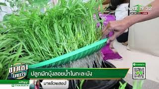 ปลูกผักบุ้งลอยน้ำในกะละมัง   29-03-61   ข่าวเช้าไทยรัฐ