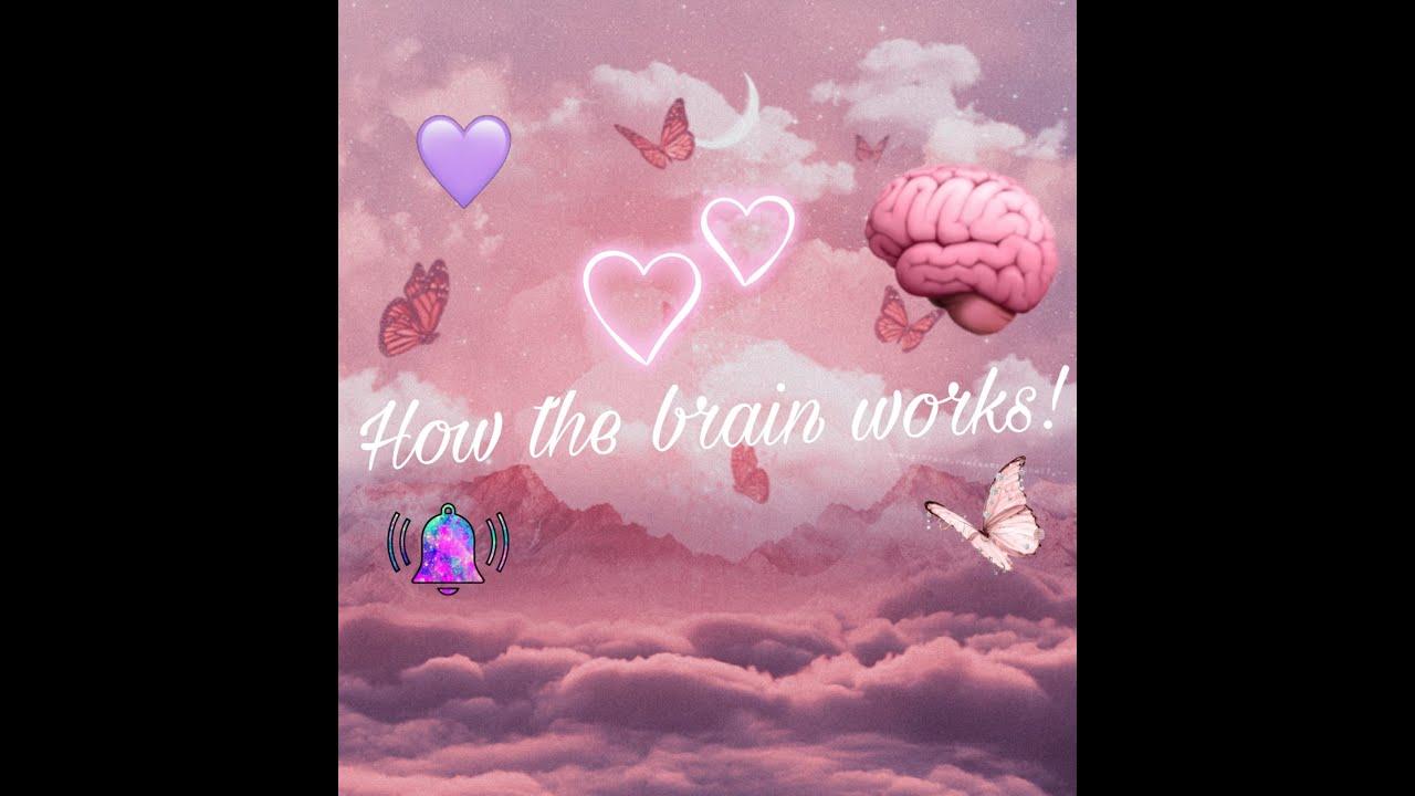 Download How the Brain Works. (Informative Speech)