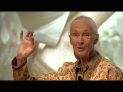 Jane Goodall Visits DigitalGlobe