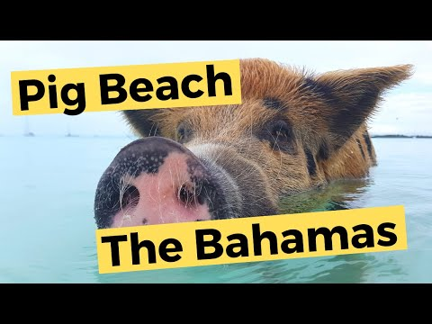 Bahamas - Swimming with Pigs | Sailing Britican S5E4