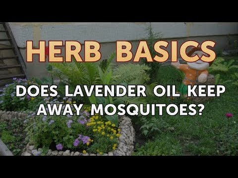 does-lavender-oil-keep-away-mosquitoes?