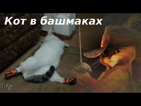 Красная шапочка сказка Сказки