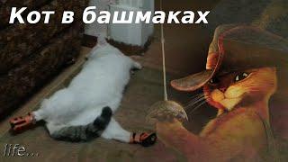 Кот в башмаках (прикол) - Puss in boots (по мотивам сказки Кот в сапогах)-life-[UniversalMAN]