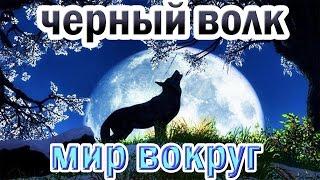 Восхождение Чёрного Волка. Документальный Фильм. National Geographic.
