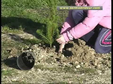 Mil ni os plantan mil rboles en fuenlabrada youtube for Pasos para sembrar una planta