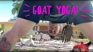 Goat Yoga | Goats Try To Eat My Bionic Arm!