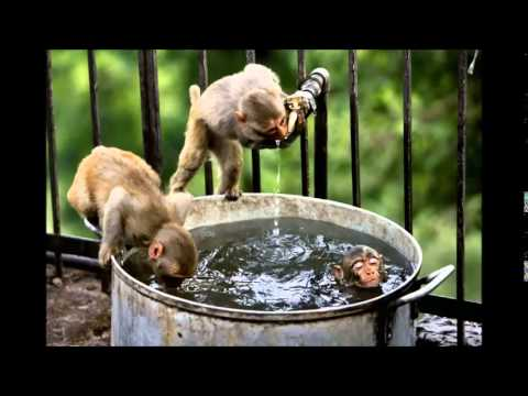 West Bengal: At least 15 monkeys die after consuming rat poison