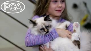 Кошка Священная бирма окраса торти-пойнт GERTRUDA BELYE LAPKY