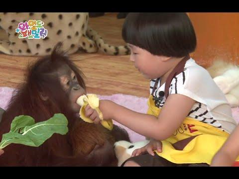 Wild Family, All about Orangutan, Doori #01, 두리의 모든것 20140725