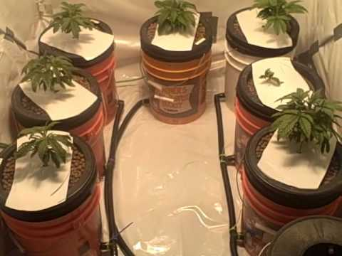 Small legal grow room 1 youtube for Small room 7 1 setup