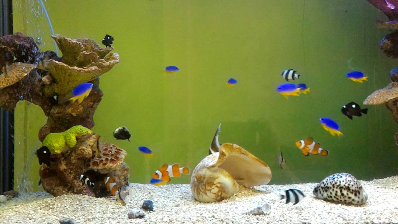 Marine fish only saltwater aquarium youtube for Fish only saltwater tank