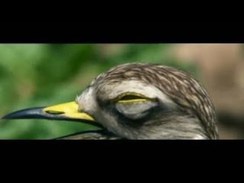 Wild Britain S01E05 The Breckland