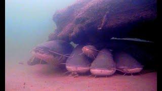 ЗДОРОВЫЕ СОМЫ В ЯМЕ СКОЛЬКО ТАМ КГ зимняя рыбалка 2021