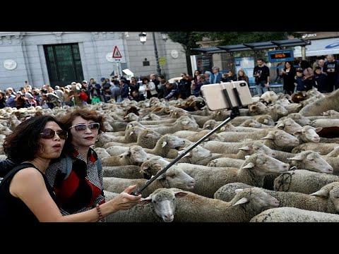 شاهد: آلاف الخراف تتجول في شوارع مدريد  - نشر قبل 2 ساعة