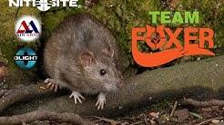 RAT CONTROL Part 2 (Bigger Better)