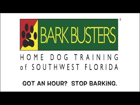 Schnauzer - Stop Barking - Dog Training of Fort Myers K9 - Patrick Logue Dog Trainer