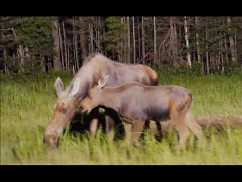"Shaw Brothers' ""New Hampshire Naturally"" and North Conway Moose Safari HD Photo Slideshow"
