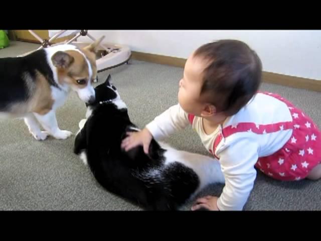 犬、猫、赤ちゃんのいる日常