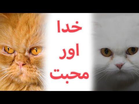fifi-&-paro- -khuda-aur-mohabbat- -teaser-2- -feroz-khan- -iqra-aziz- -fifi-the-golden-cat