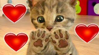 ПРИКЛЮЧЕНИЕ МАЛЕНЬКОГО КОТЕНКА мультик смешное видео для детей мультфильм про котиков #УШАСТИК КИДС