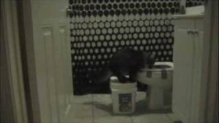 Cat uses the Toilet - Potty Training (Part one)