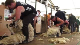 Northumberland 2016 Open Sheep shearing final - WATCH IN HD