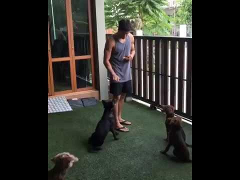 [ณเดชน์]  ฝึกน้องหมาด้วยภาษาอังกฤษ (ท้ายคลิปเหยียบระเบิดซะงั้น)