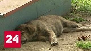 Жительницу Хабаровска привлекут к суду за издевательство над животными