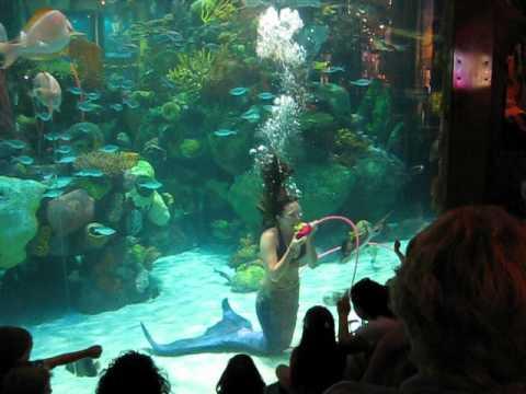 Aquarium casino canne