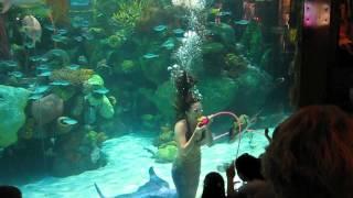 Silverton Casino Aquarium..Mermaid Show
