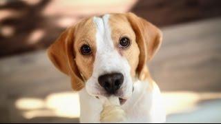 [5 умных мыслей] Почему собаки закапывают кости?