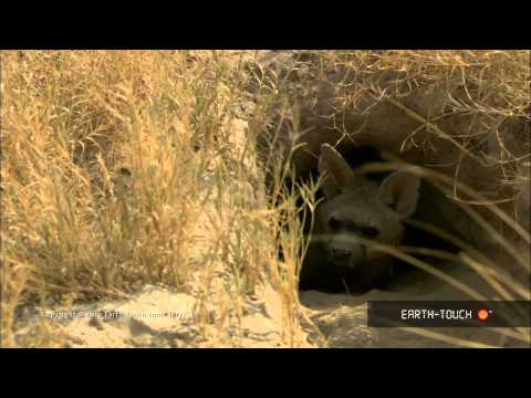 A Rare Hyena & The Biggest Fish On Earth
