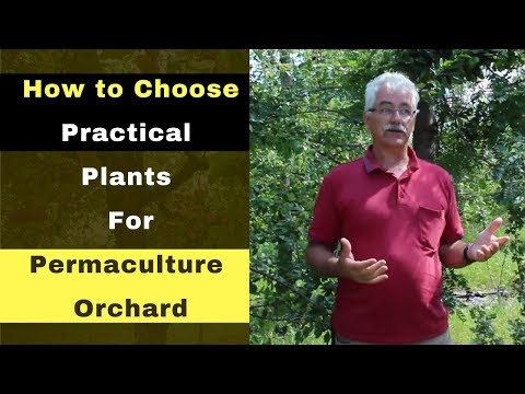 How to Choose Practical Plants for a Permaculture Orchard   Starting Permaculture Orchard Part 1