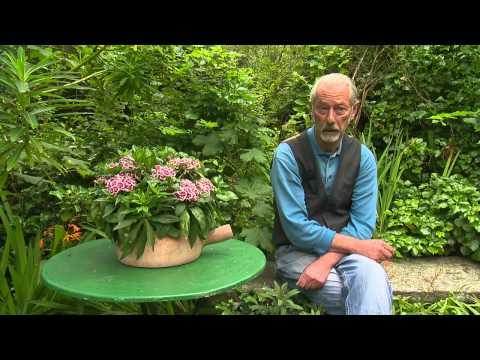 Jardin de normandie jardin en hommage jacques pr vert for Jardin jardinier normandie