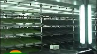 biotec Production orge hydroponique