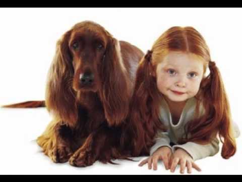 Personas parecidas a animales youtube - Animales con personas apareandose ...