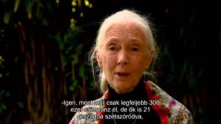 A very impressive interview with Jane Goodall. (2016)