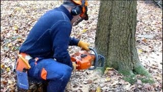 Felling an Oak Tree - NPTC CS32 Chainsaw Course