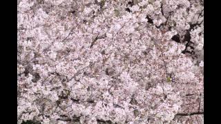 マイ スライドショー 仁徳天皇陵と周辺(2015年4月6日) この動画...
