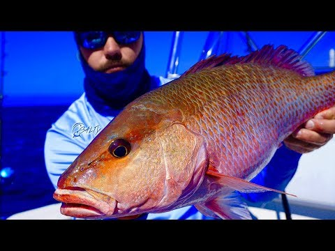 Catch HUGE Mangrove Snapper & Grouper (Epic Day Gulf Of Mexico Fishing)