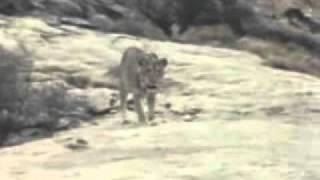 Любовь животного и человека