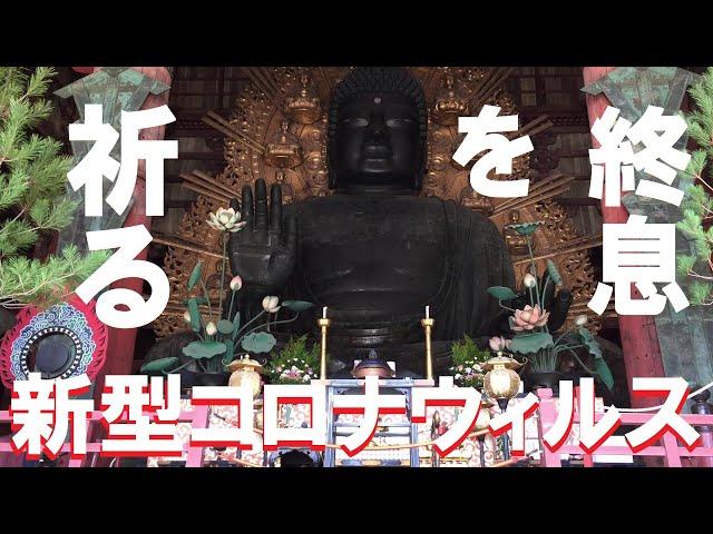 ②/③『奈良公園のシカにもコロナウィルスの影響が及んでいる』とニュースで見たので奈良公園に行ってみた。東大寺で新型コロナウィルスの終息を祈る編【#2 今話題の場所に行ってみた】
