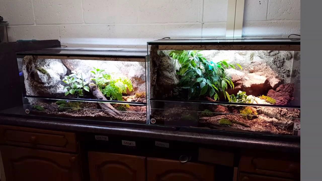 Natural Vivarium For Leopard Geckos Youtube