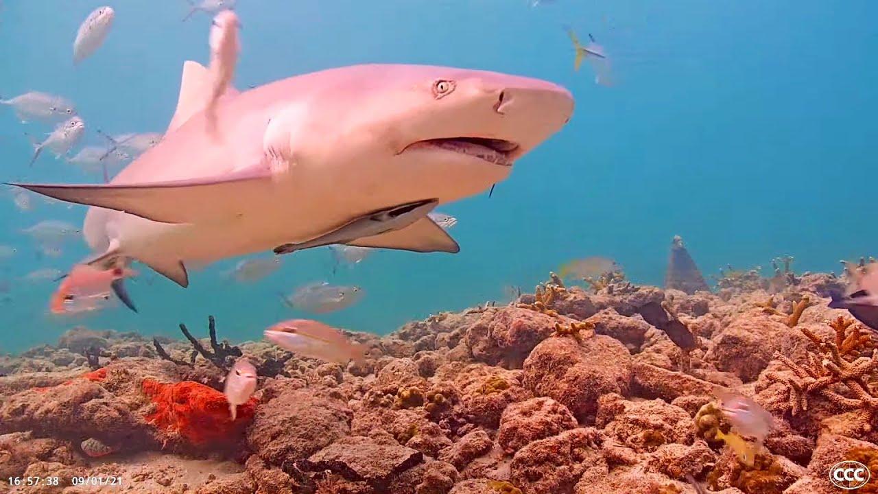 Coral City Camera