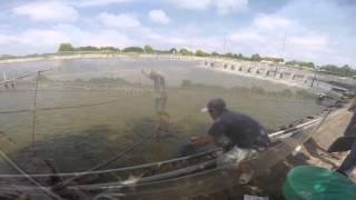 Vietnam Shrimp Farm