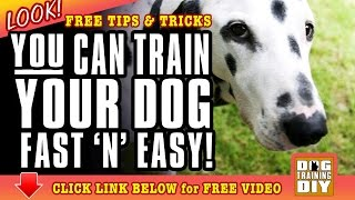 Dog Training Long Beach | Free Dog Training Tips | Dog Obedience Training Long Beach, Ca