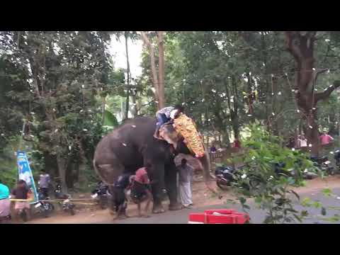 Elephant attack-Ottapalam,Kerala,India (Sivadas ...  Kerala Elephant Attack Youtube